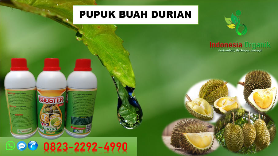 Buah Durian Di Kebun Montong Sukabumi