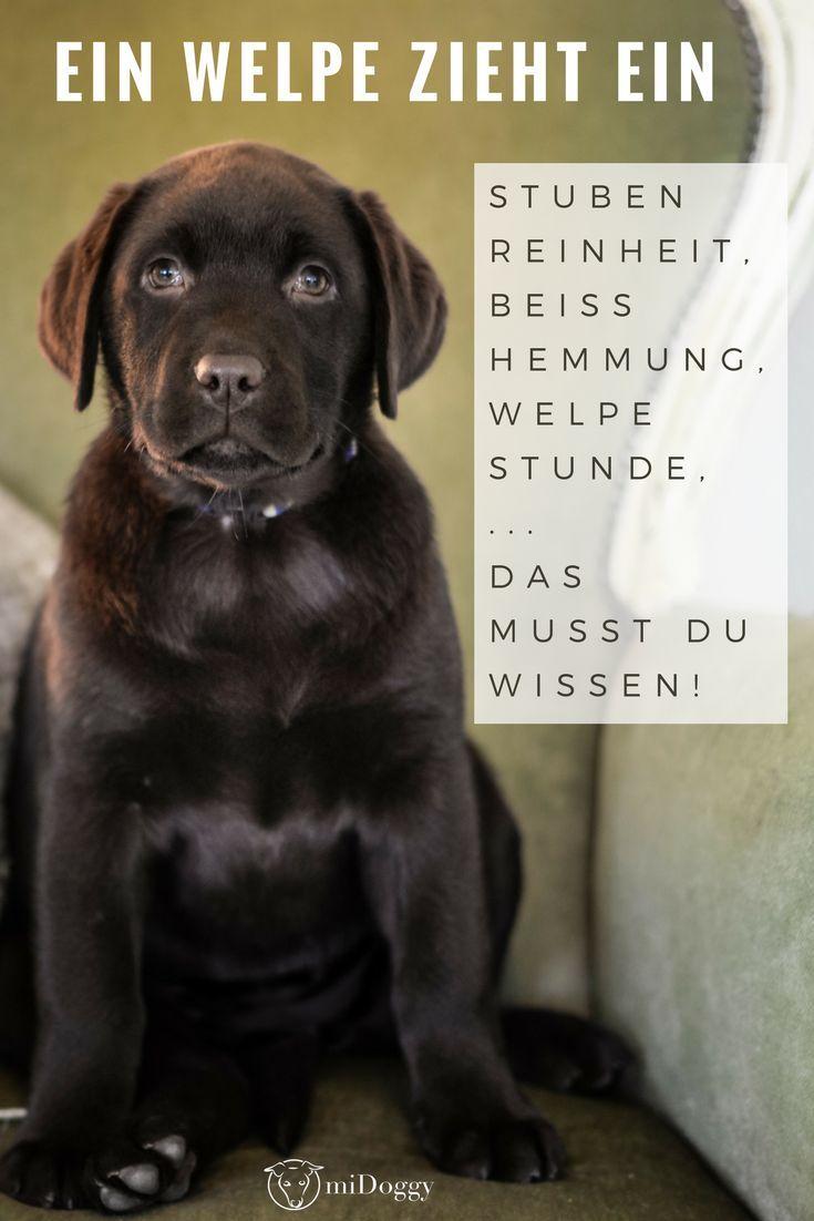 Welpe Hund Hunde Tipps Ideen Welpen