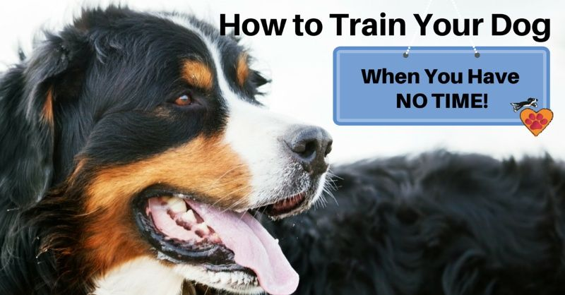 How To Train Your Dog When You Have No Time Dancing Hearts