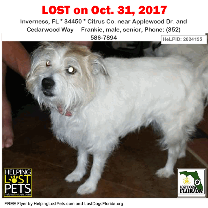 Pin by Lost Dogs Florida on Lost Dogs Losing a dog