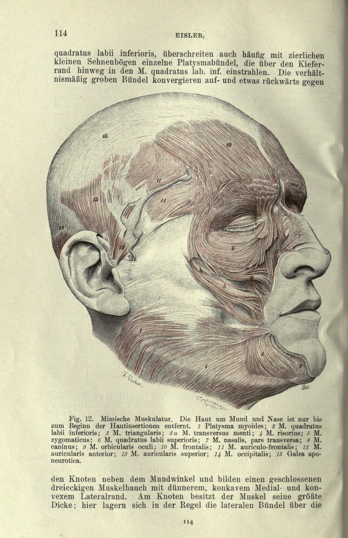Muscles Of Facial Expression Diagram Wireless Winch Remote Wiring Handbuch Der Anatomie Des Menschen Human Anatomy