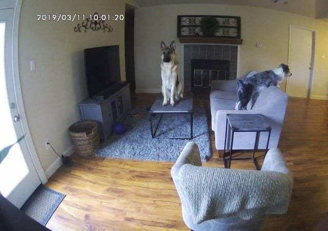 14 Times Pets Were Caught Being Bizarre On Security Camera Live