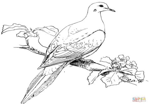 Mourning Dove Coloring Page Peace