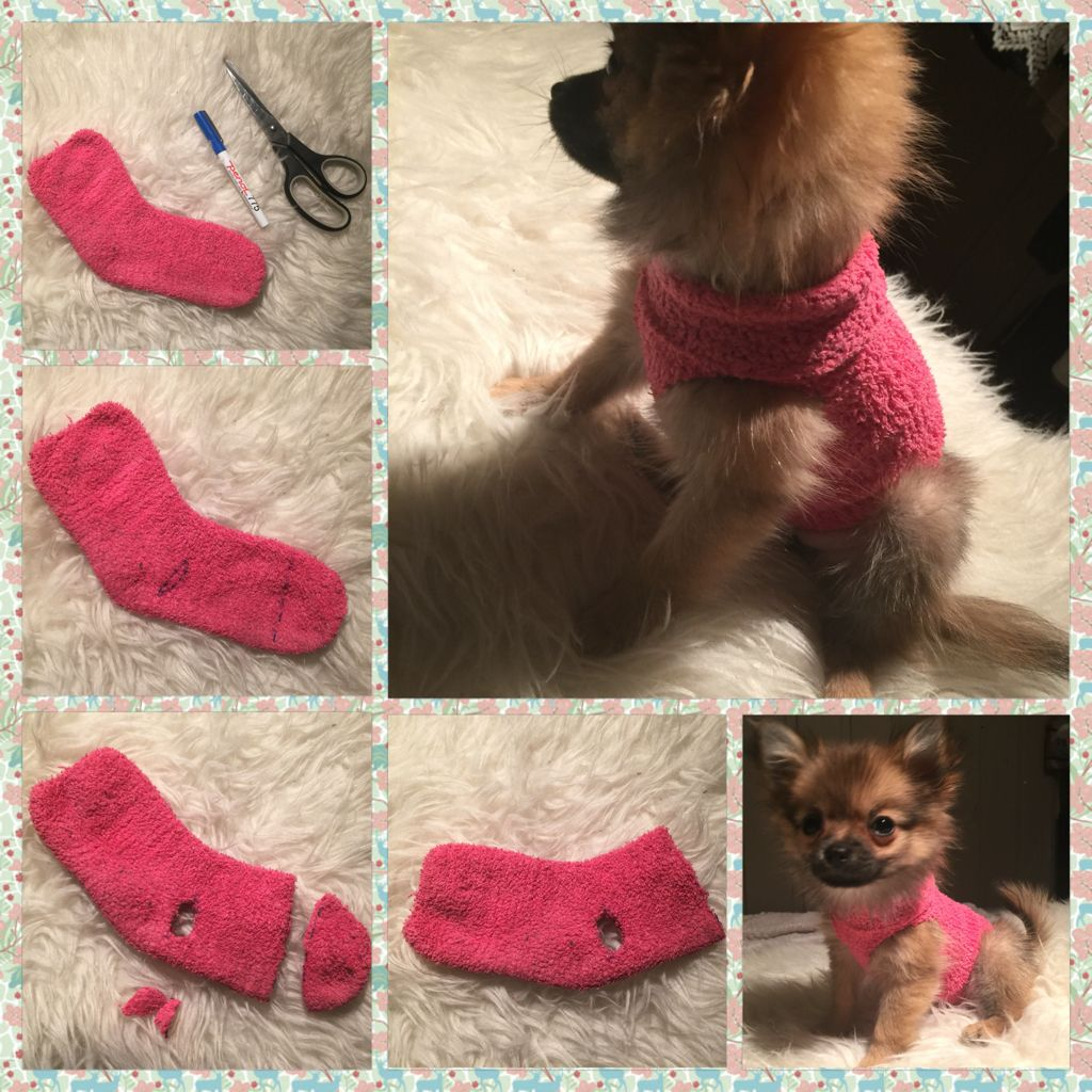 How to make a sweater for your puppy out of a sock!   Pets ...