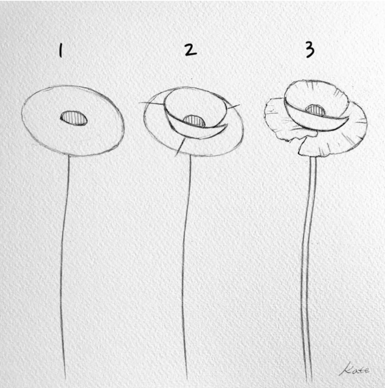 Easy Flowers To Draw For Beginners Step By Step