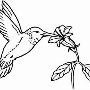 Hummingbird Animal Coloring Pages. Animals Page Hummingbird Flying Coloring  How to Draw Robin Bird Happy Black chinned eat nectar on hummingbird coloring page