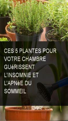 Ces 5 plantes pour votre chambre gu rissent l 39 insomnie et l 39 apn e du sommeil sante plante - Plante dans la chambre ...