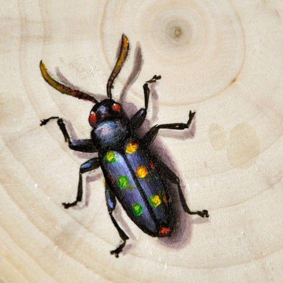 Original Insect Painting - Beetle