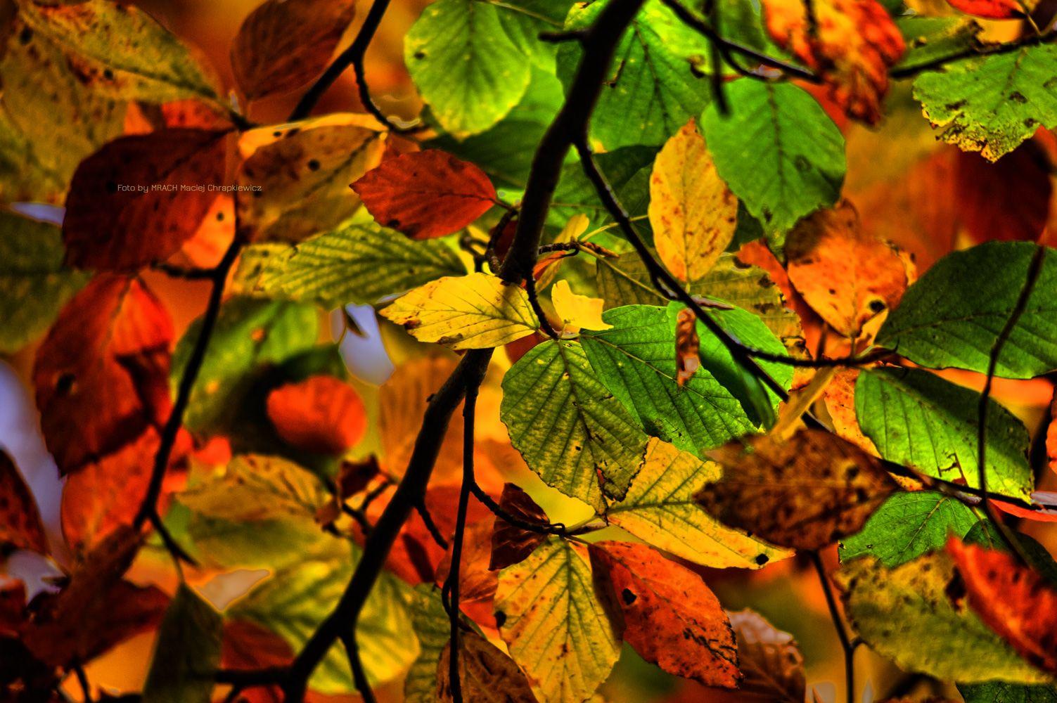Wszystkie Kolory Jesieni Mrach Fotografie Plants Flowers Pumpkin