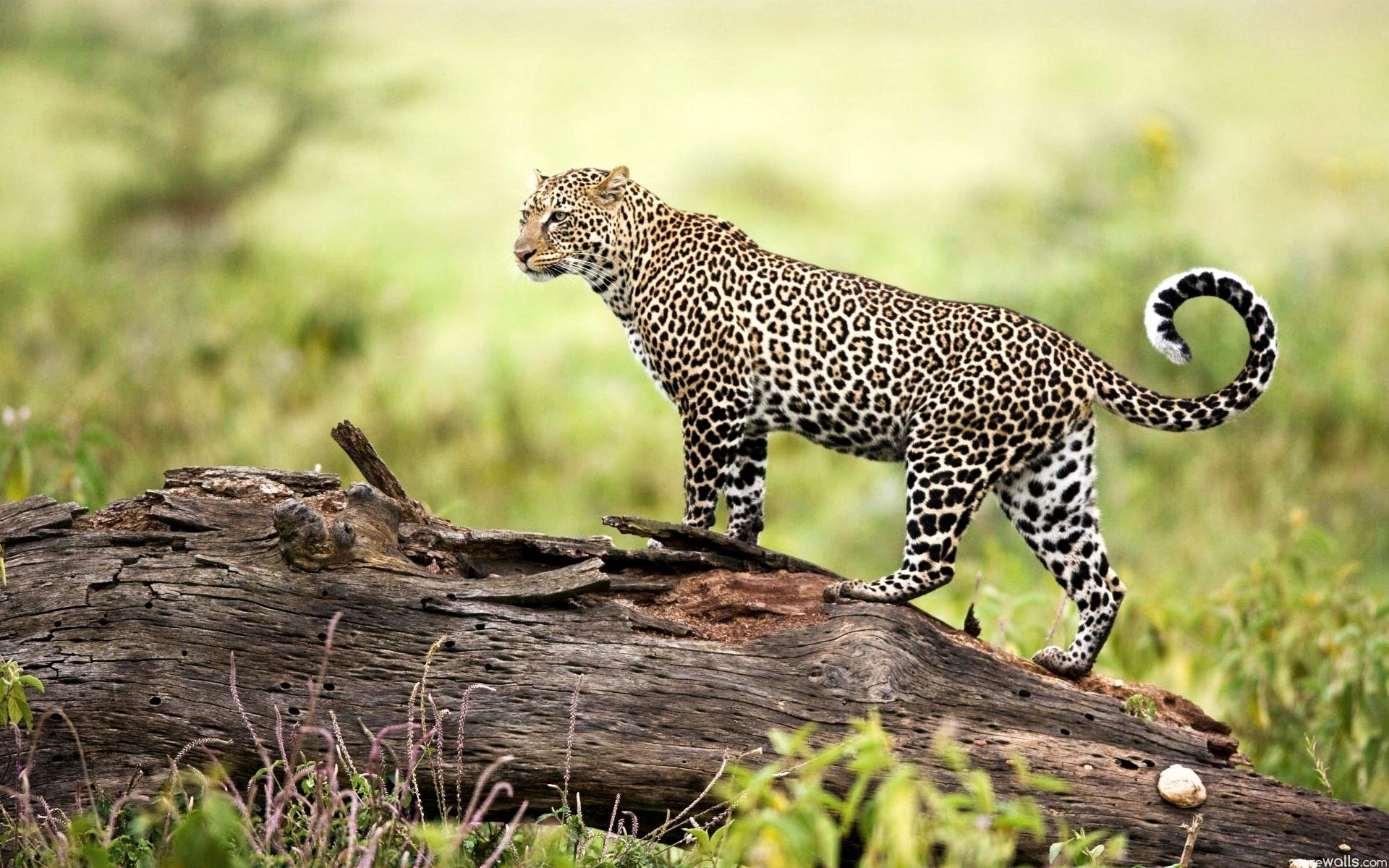 200 best photography images on Pinterest | Wildlife photography ...