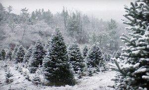 Groupon - Christmas Tree and Optional Wreath at S & C Tree Farm ...