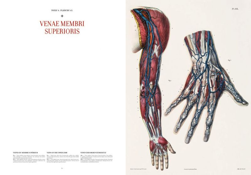 Atlas Of Human Anatomy And Surgery Recherche Google Anatomy