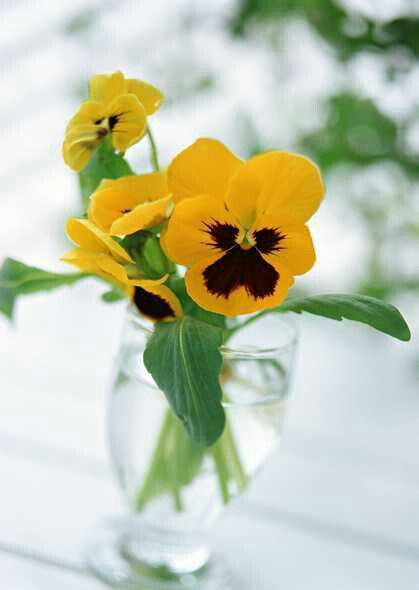 Pin By Patty Perez On Pretty Flowers Pansies Flowers Pansies Blue Flower Wallpaper