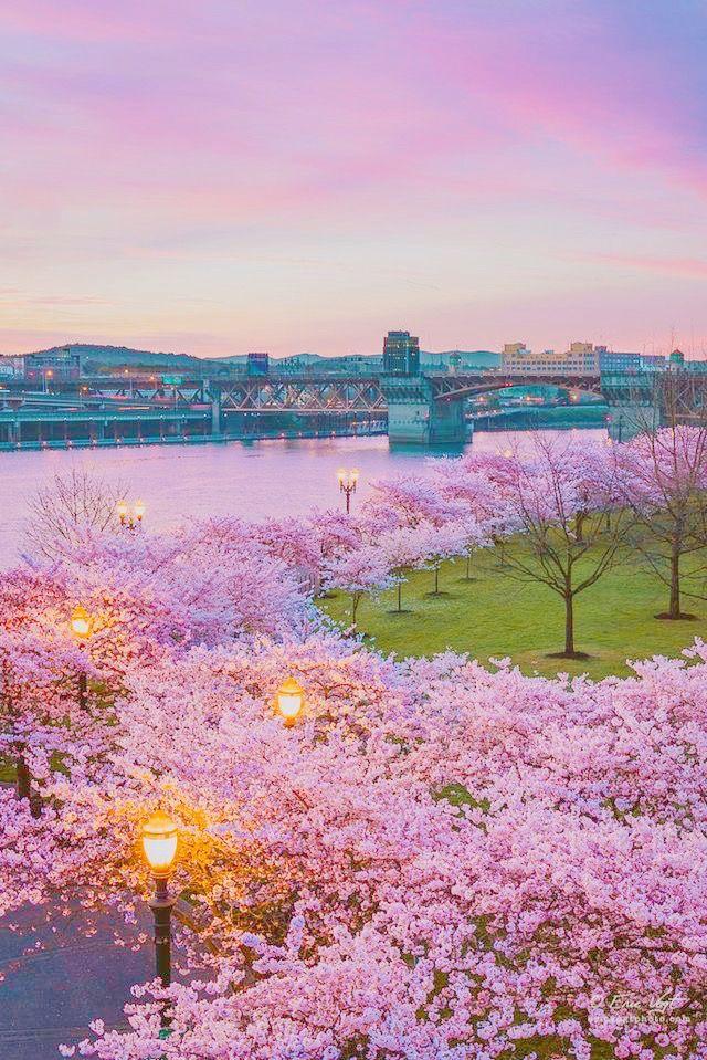 K I T T Y Q U E E N Spring Scenery Beautiful Nature Scenery