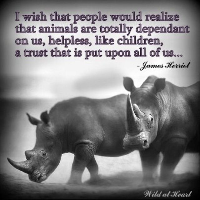 Stop rhino poaching | I love all animals | Pinterest ...