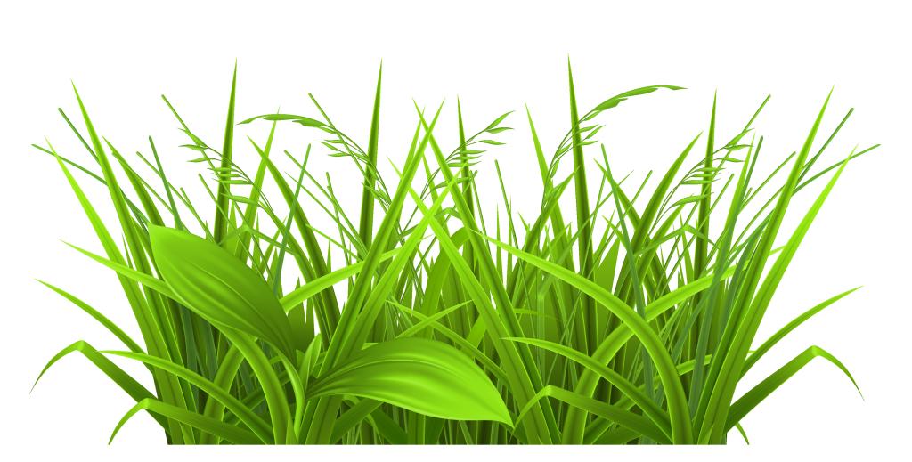 Санаторий открытка, картинки трава для детей
