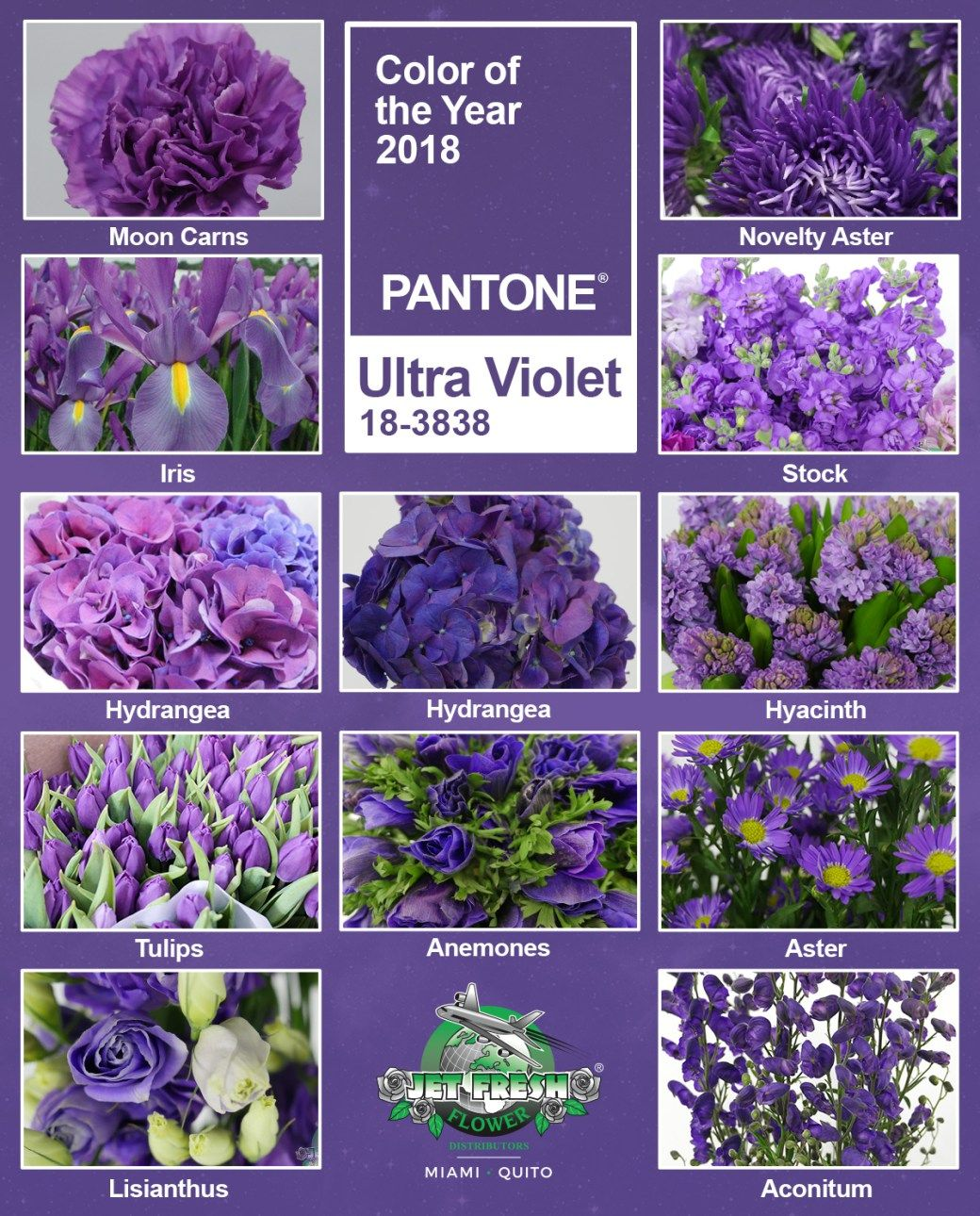 Flower Inspiration For The Pantone