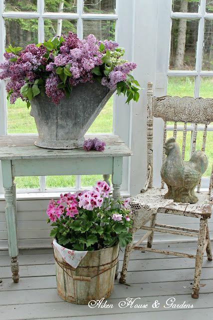 Buckets of Lilacs