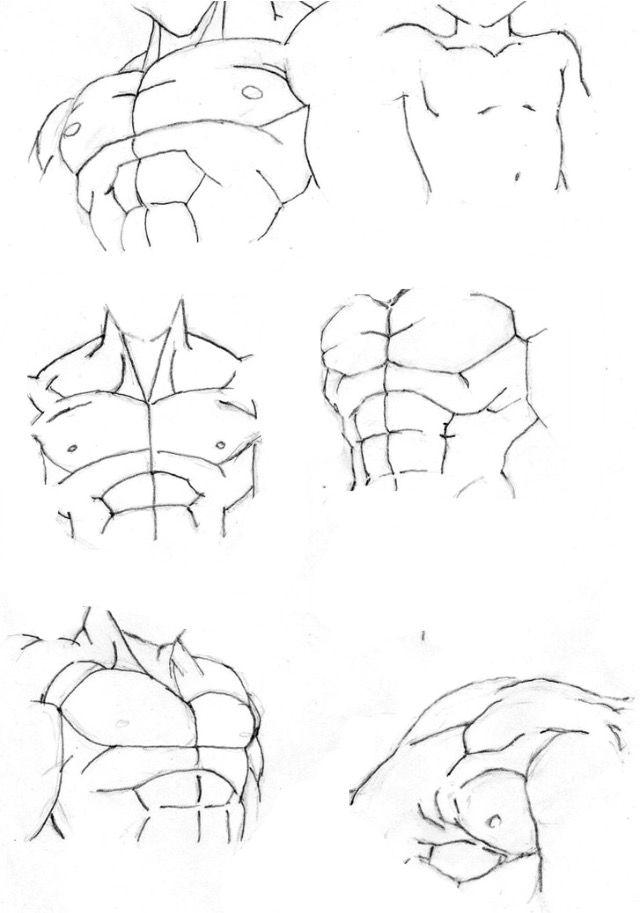 Torso DB   Dragon Ball   Pinterest   Anatomía, Bocetos y Dibujo