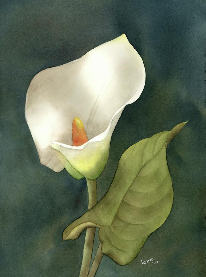Calla Lily By Leona Jones Watercolor Flowers Paintings Floral Art Canvas Calla Lily