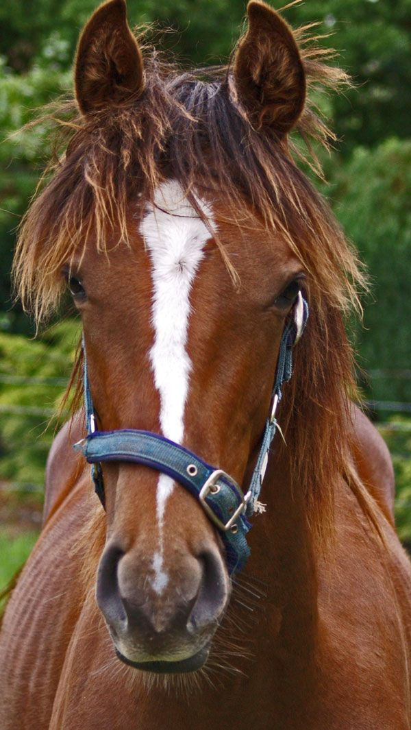 Horse front view google search 2015 musical animals pinterest horse front view google search sciox Choice Image