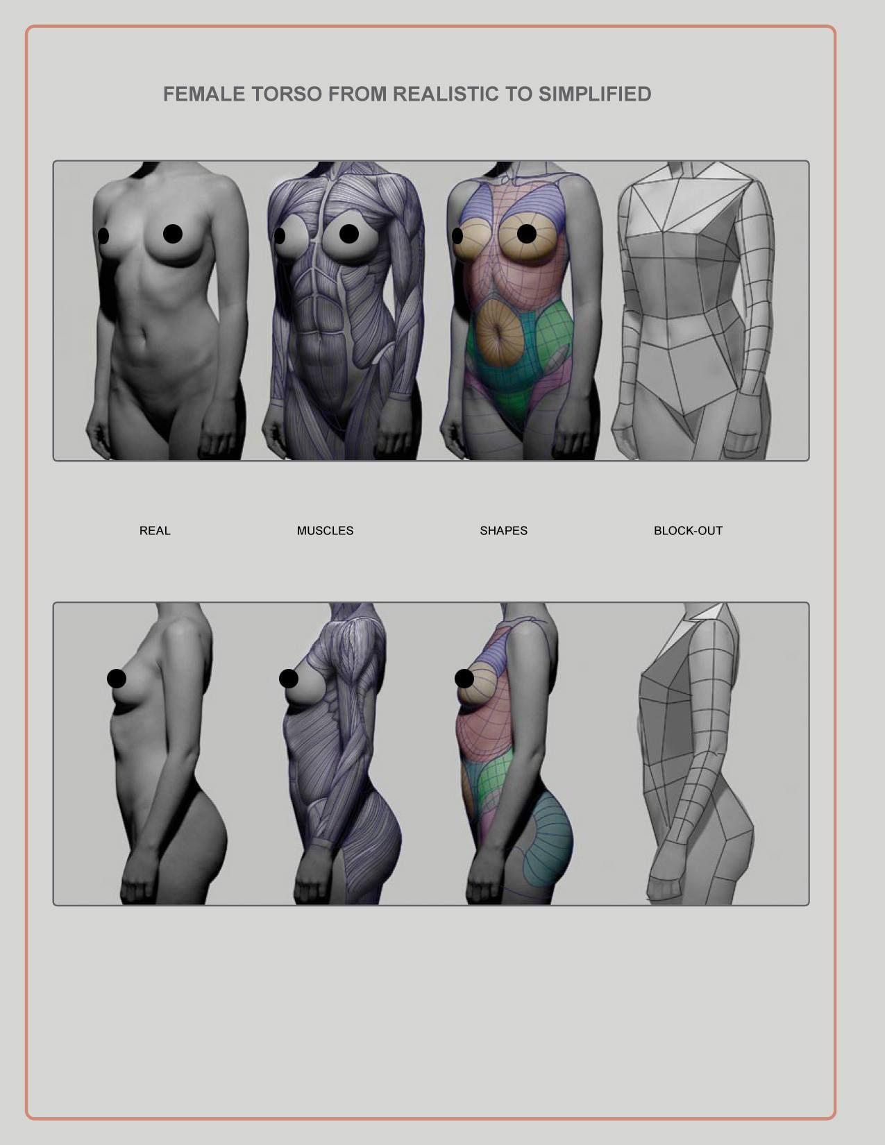 Pin By Fabian Schmidt On Anatomy Pinterest Anatomy Art Studios
