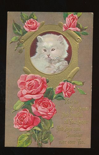 Kitty Cat~~White Kitten in Cameo with Rose Flowers~Greeting~Postcard-ccc857