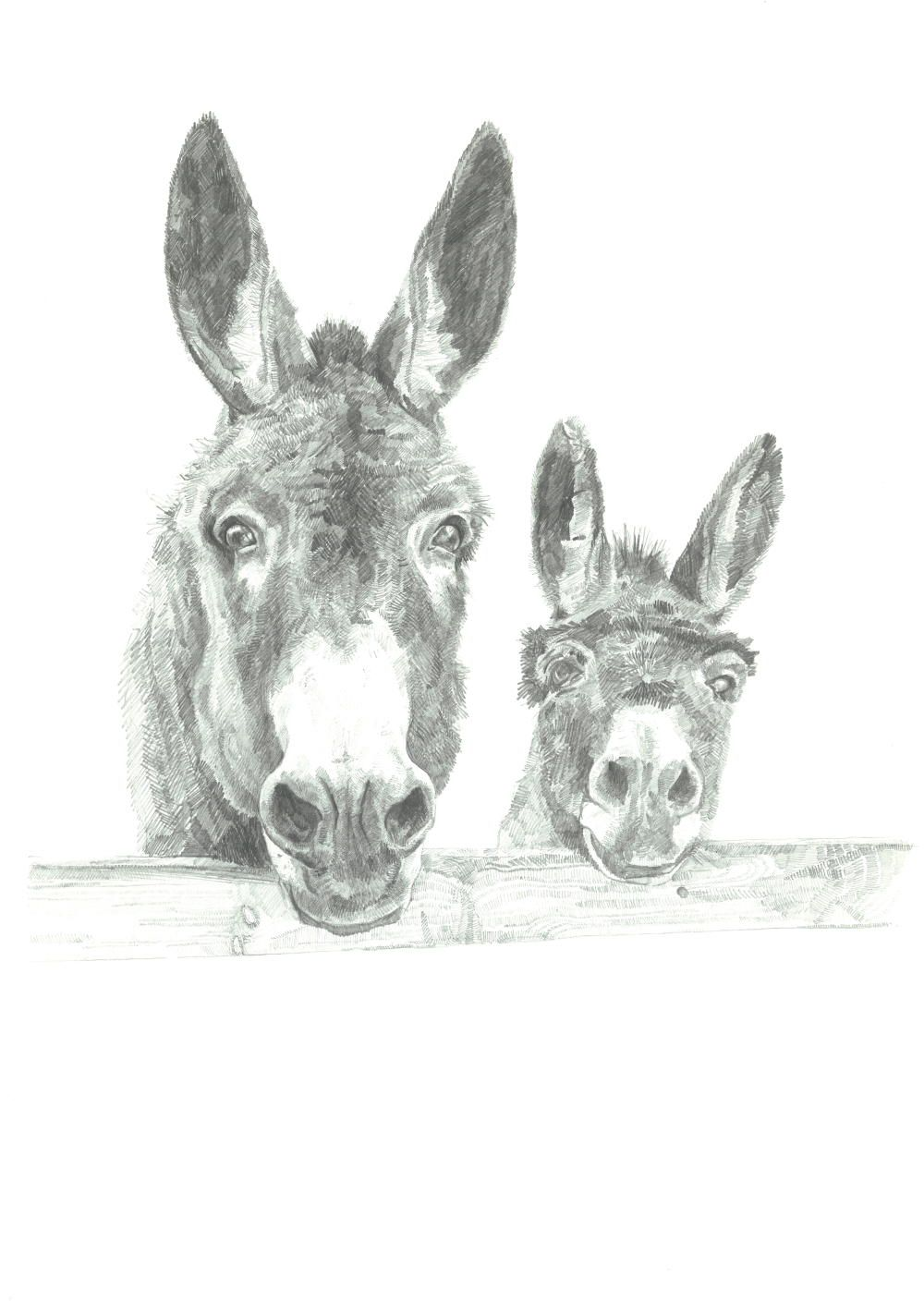 donkey illustrations drawing - Google Search | Animal ...