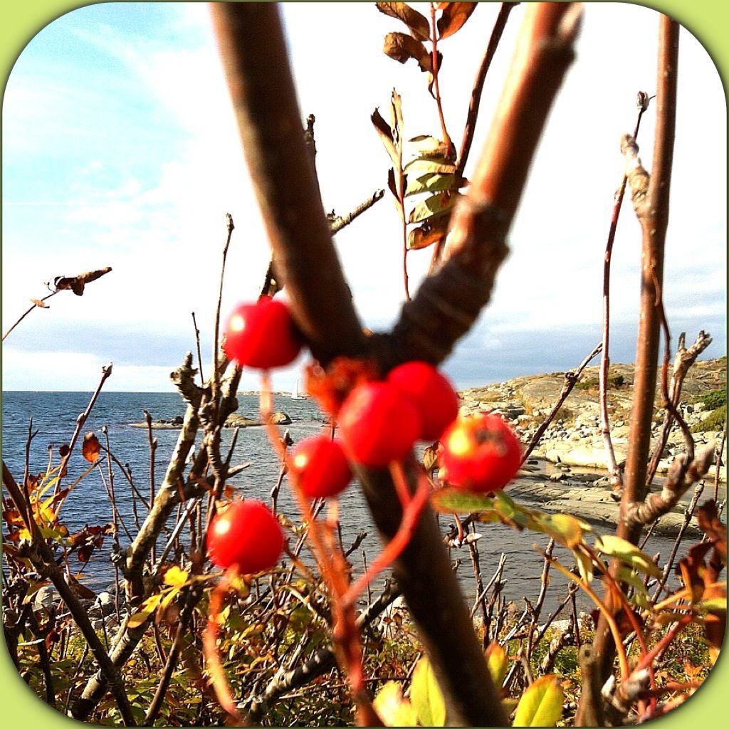 Vid havet, by the sea