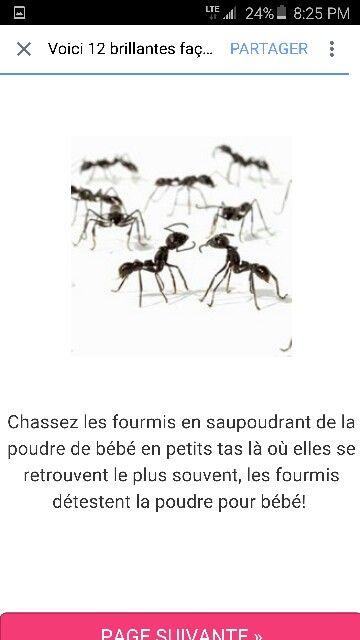 Faire fuire les fourmis ... soupoudrez de poudre de bébé