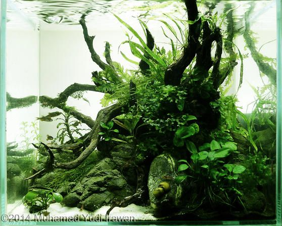 2014 AGA Aquascaping Contest - Entry #56 | Aquascape ...