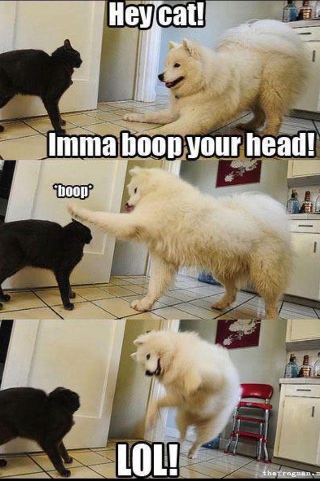 Hahaha LOL