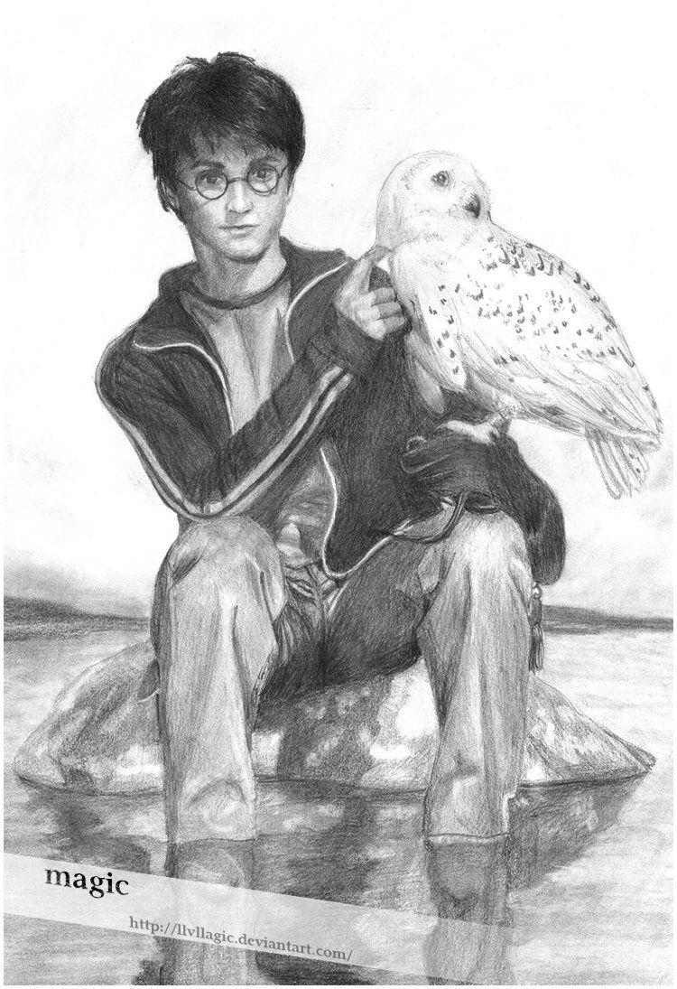 harry potters owl drawing images amp pictures nearpics