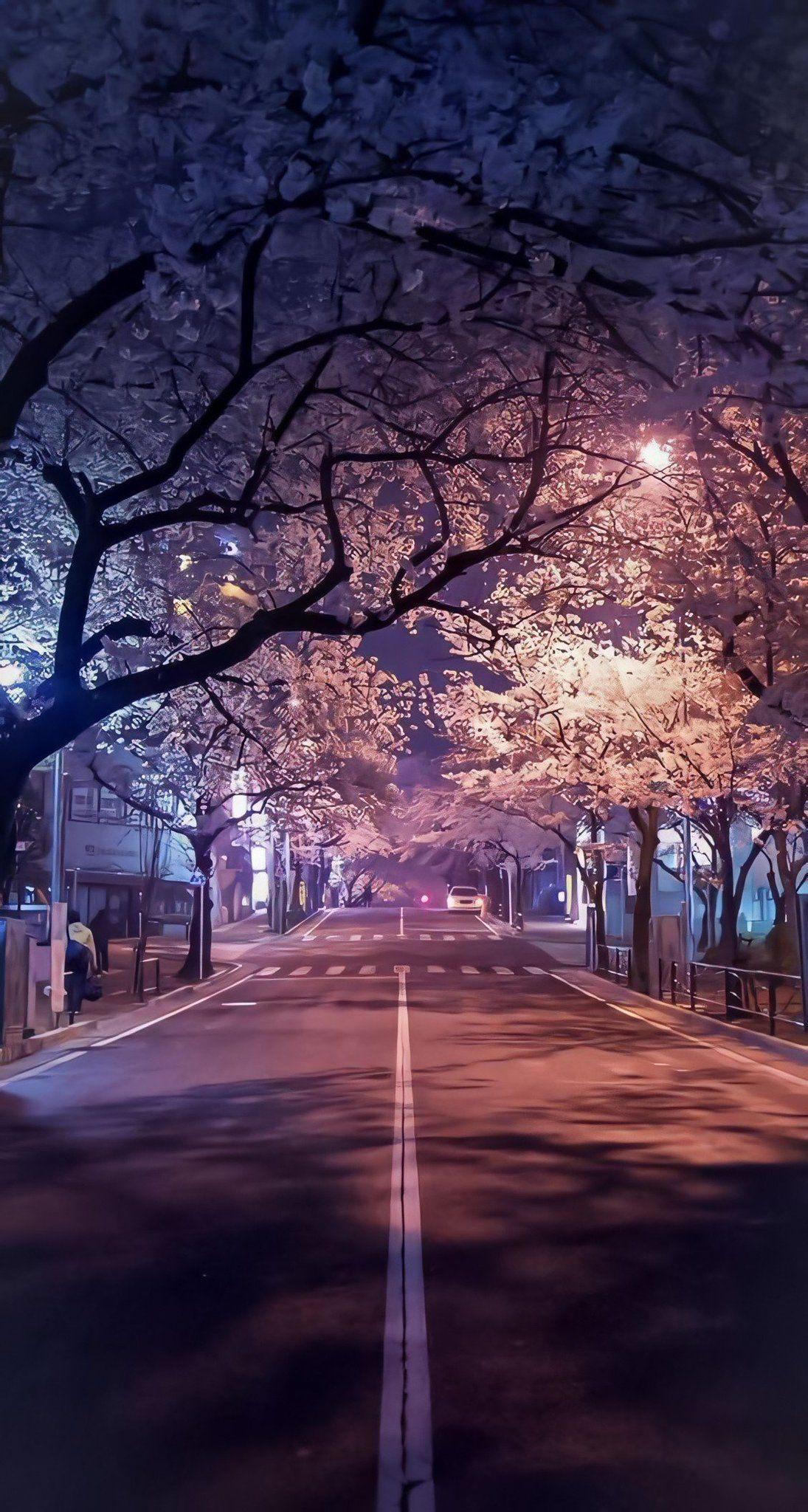 Japan Visuals On Twitter In 2021 Cherry Blossom Wallpaper Cherry Blossom Background Japan Aesthetic
