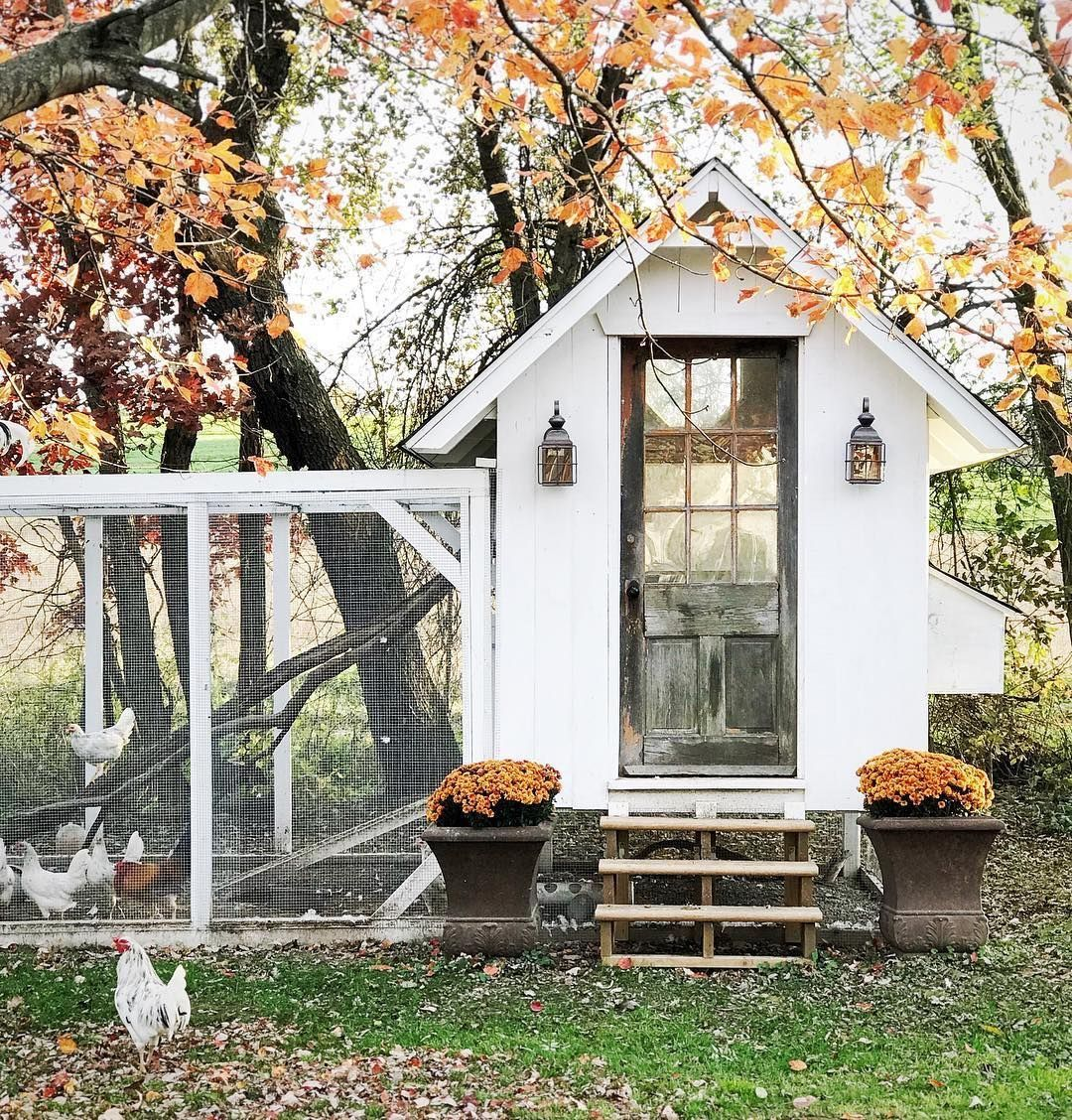 Pin By Baylie Blossom Co On Lord Love A Duck In 2020 Chickens Backyard Backyard Chicken Coops Chicken Coop