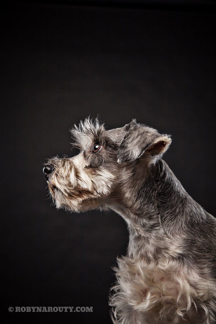 12748021 10153860359869277 3795962094311381203 O Jpg Animal Photography Dogs Pets