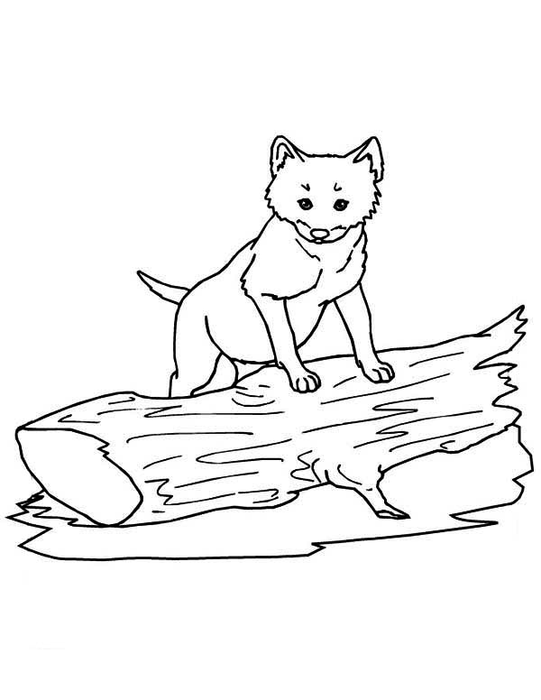 Cute Little Wolf Coloring Page Download Print Online Coloring Pages For Free Color Nimbus Online Coloring Pages Cute Coloring Pages Wolf Colors