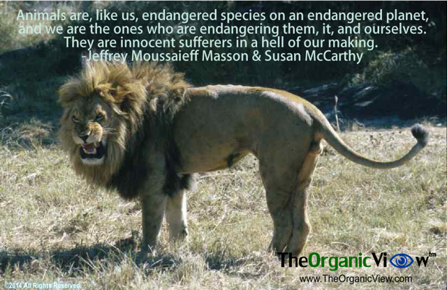 Animals Are, Like Us, Endangered Species On An Endangered