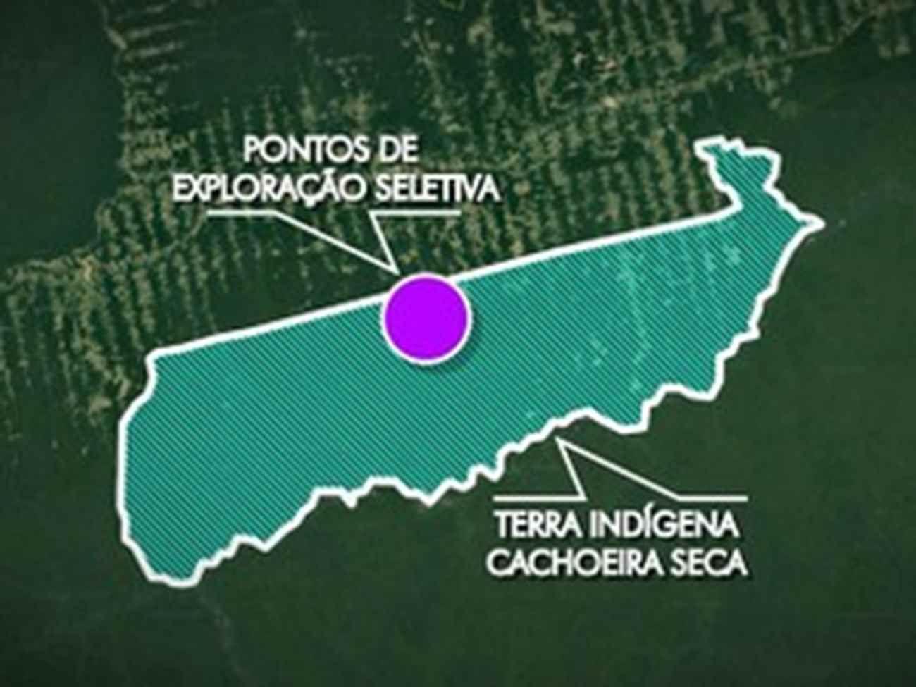 Ibama fecha serrarias que extraíam madeira em terras indígenas no PA | Combate Racismo Ambiental