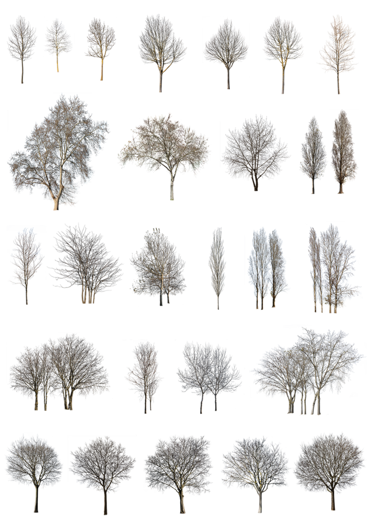 Photo of 27 winter trees pack
