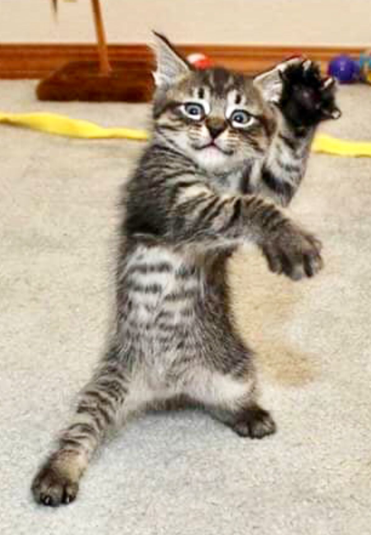 I Know Kung Fu Chop Sticks And 2 Other Chinese Words I Think It S Chinese Cats Cute Cats And Kittens Cute Animals