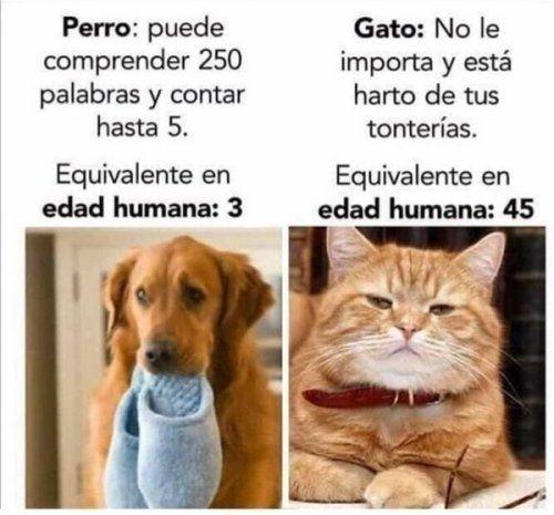 Una Clara Diferencia Entre Gatos Y Perros Cat Memes Memes Quotes Memes