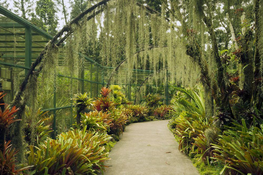 Take The Scenic Route At The Singapore Botanic Gardens Singapore Attractions Singapore Botanic Gardens Singapore Travel