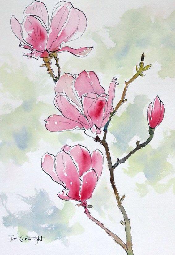 Magnolias Aquarelle Fleurs Peinture Aquarelle Et Encre