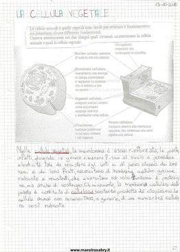 Quaderno Di Scienze Classe Quinta Quaderni Di Scienze