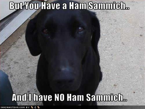 Sammiches!