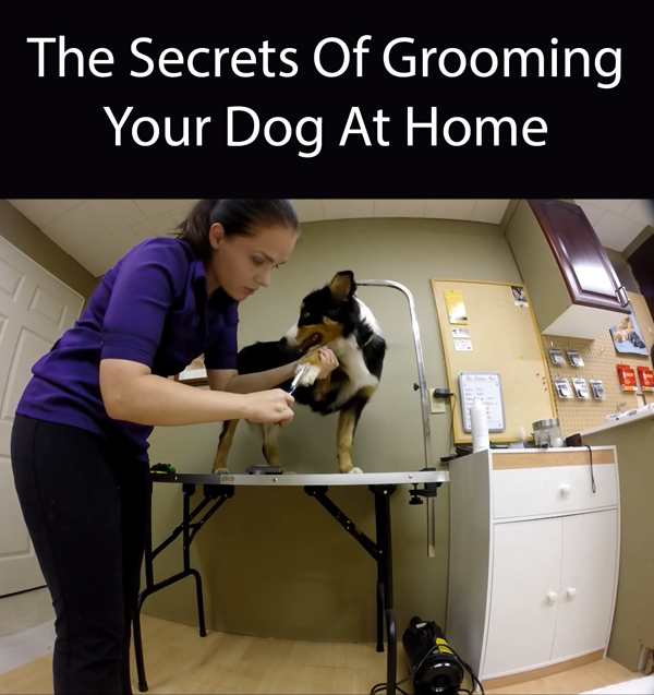 How To Groom Your Dog At Home Dog Grooming Dog Care Grooming