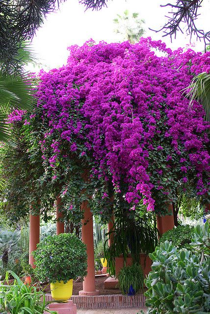 Majorelle Gardens in Marrakesh, Morocco: Its a most visited site in Morocco. Its a little oasis in the heart of Marrakesh.  www,travelxcapes.com