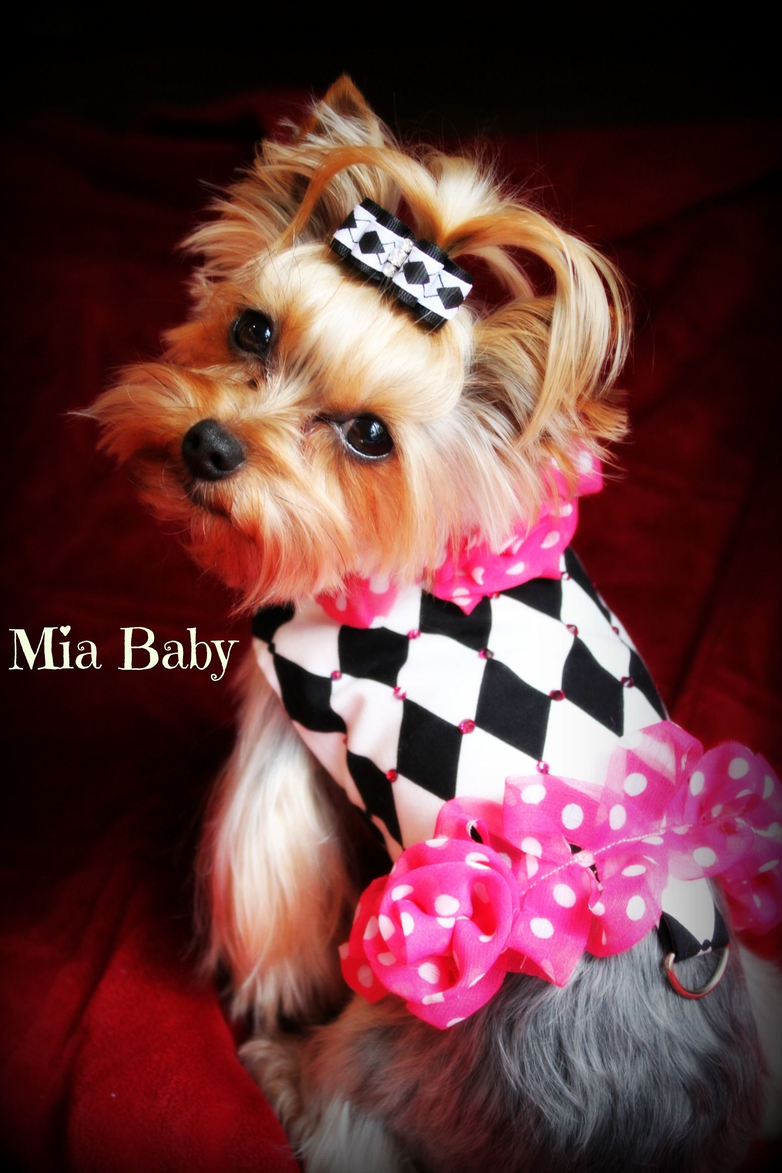 teacup yorkie clothes harlequin yorkie pink dog clothes mia yorkie for my 5335