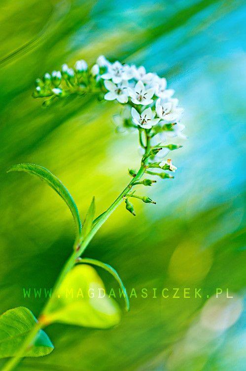 Magda Wasiczek flowers